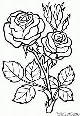 Coloring Flowers Pages Rose sketch template