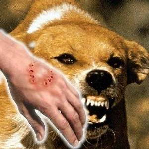 Can a stray puppy dog's scratch cause rabies if the skin is slightly broken