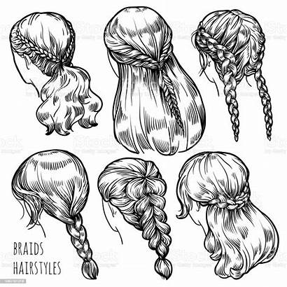 Braids Hairstyles Illustration Vector Adult Adults Womens