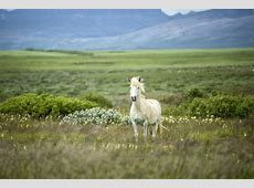 Die besten Island Tipps für Anfänger Urlaubsgurude