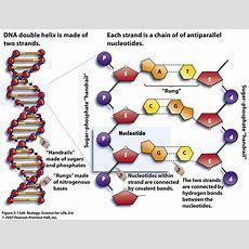 Exam 1  Biology 301m With Fritz At University Of Texas  Austin Studyblue