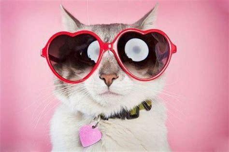 cute cats  sunglasses