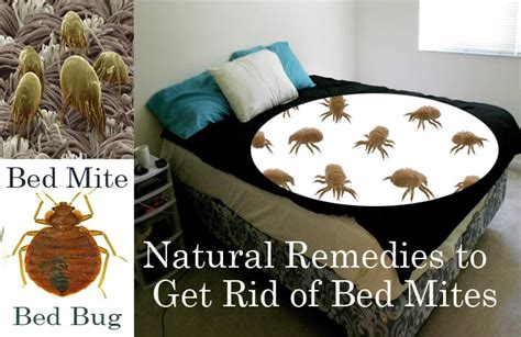 20 Natural Home Remedies To Get Rid Of Bed Mites (dust