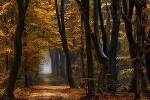 Nature, Landscape, Forest, Path, Mist, Fall, Yellow