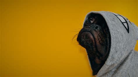 wallpaper dog funny animals  animals