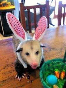 17 Best images about Precious Possums on Pinterest | Pets ...