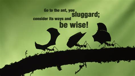 sluggard christian wallpapers