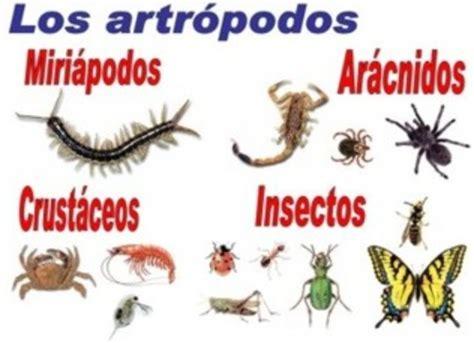 animales invertebrados timeline timetoast timelines