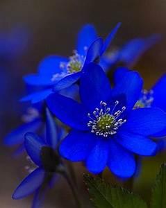 Beautiful Blue Flowers | FLOWERS FLOWERS FLOWERS | Pinterest