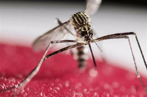 central florida mosquito war update  good news