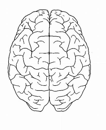 Brain Coloring Pages Neuroscience