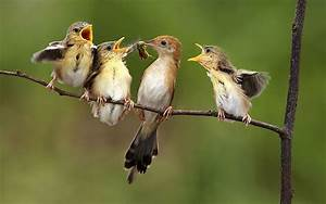All Bird Singing A Song Picture - Images, Photos, Pictures