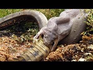 8 Monster Mengerikan Penguasa Sungai Amazon - YouTube