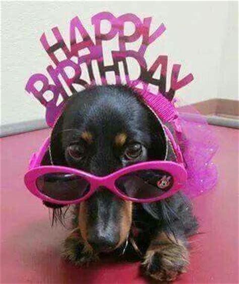 Dachshund Birthday Meme - 526 best images about dachshunds birthday greetings celebrations on pinterest birthday