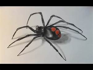 Drawing & demo: Juvenile Black Widow spider; F, H, B ...