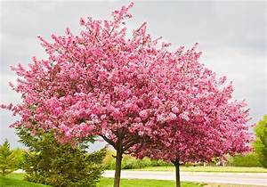 Types, Of, Ornamental, Trees, To, Use, In, Landscaping
