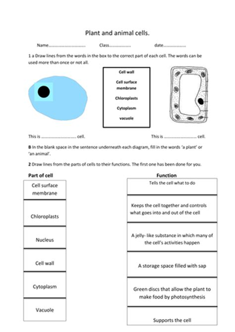 plant  animal cell worksheet  rosie teaching