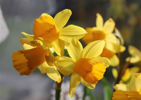 Blossom, Flower, Petal, Bloom, Spring