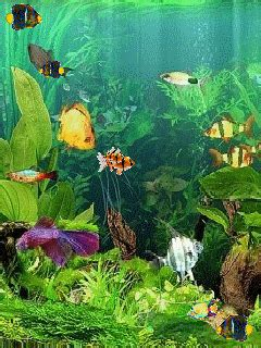 Animated Fish Aquarium Wallpaper Mobile - aquarium and colour fish mobile wallpaper