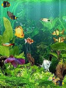 Fish Aquarium Screensaver Free Download | 2017 - 2018 Best ...