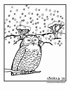 Winter Bird Coloring Pages Download And Print For Free ...