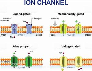 Types Of Ion Channel Stock Vector Art & More Images of ...