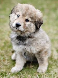 Mixed breed puppies, Dog sale and Beautiful on Pinterest