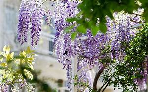 Pflanzen Für Den Vorgarten : mediterrane pflanzen f r den garten die sch nsten exoten ~ Michelbontemps.com Haus und Dekorationen