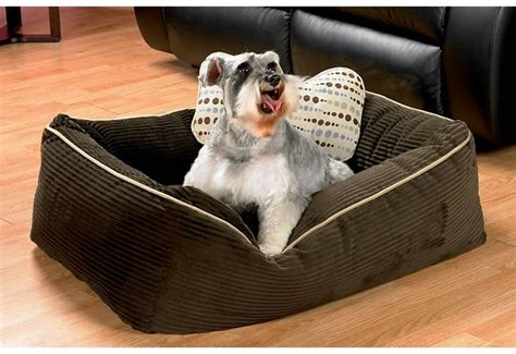 how to remove dog hair from sofa 1000 images about pets in your home on pinterest gloves