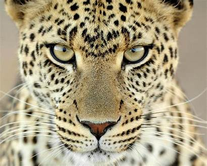 Animals Wild Wallpapers Desktop Latest Coming Animal