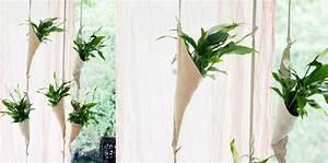 Plante Suspendue Intérieur : plante d int rieur suspendue l 39 atelier des fleurs ~ Teatrodelosmanantiales.com Idées de Décoration