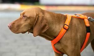 Hundezubehör Auf Rechnung Bestellen : hundegeschirr kaufen hundezubeh r auf ~ Themetempest.com Abrechnung