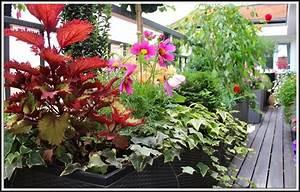 Erdbeeren Wann Pflanzen : erdbeeren pflanzen balkon wann download page beste wohnideen galerie ~ Frokenaadalensverden.com Haus und Dekorationen