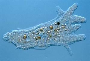Amoebas Are More Than Just Blobs