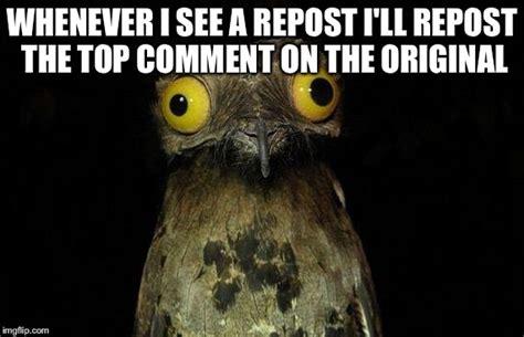 Potoo Meme - weird stuff i do potoo memes imgflip