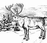 Elk Coloring Pages Winter Print sketch template