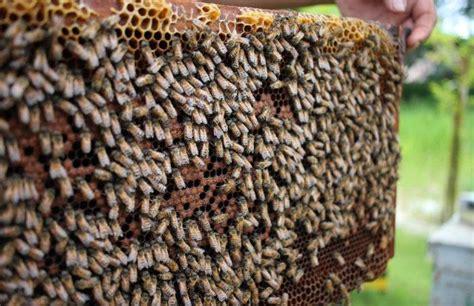 wie wird honig gemacht d 252 rfen veganer honig essen probiere es mit diesem honig ersatz myprotein