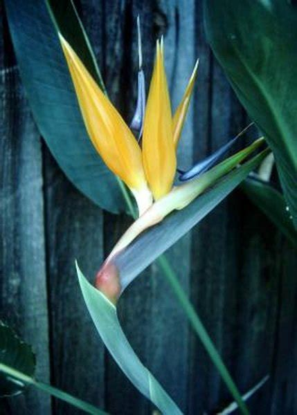 The Birds Of Paradise And Cats Pets