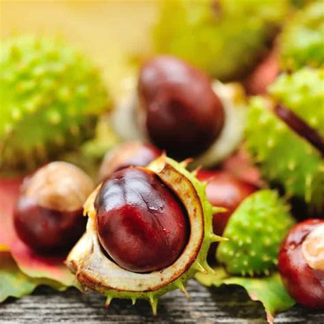Horse Chestnut Supplement Uses & Health Benefits - Dr. Axe