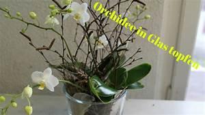 Tulpen Im Glas Ohne Erde : diy orchidee im glas simpel einfach eintopfen youtube ~ Frokenaadalensverden.com Haus und Dekorationen