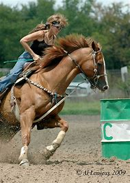 Best Barrel Racing - ideas and images on Bing | Find what