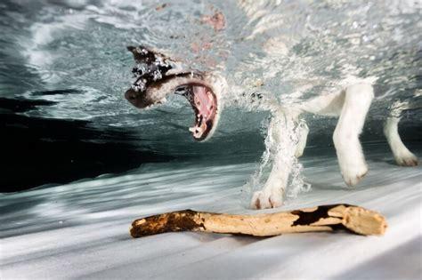 hunde unter wasser fotografie issn ruede hunde news