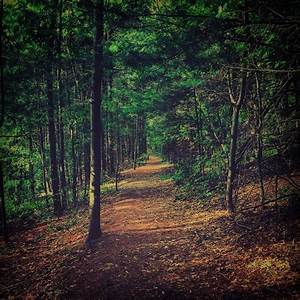 Free Images : path, pathway, outdoor, wilderness, branch ...