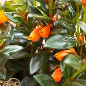 Pflanzen Für Drinnen : bl hende zimmerpflanzen farbige deko ideen mit pflanzenarten ~ Frokenaadalensverden.com Haus und Dekorationen