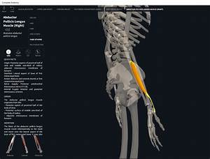 Muscles  Abductor Pollicis Longus   U2013 Anatomy  U0026 Physiology