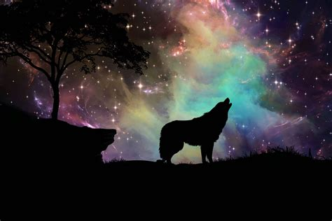 Galaxy Wolf Wallpaper Hd by Wolf Wallpapers Photos And Desktop Backgrounds Up To 8k