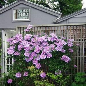 Immergrüne Kletterpflanze Winterhart : immergr ne hecke mit 100 sichtschutz online kaufen ~ Yasmunasinghe.com Haus und Dekorationen