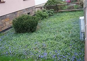 Pflanzen Für Den Vorgarten : vinca minor kleines immergr n universaler bodendecker ~ Michelbontemps.com Haus und Dekorationen