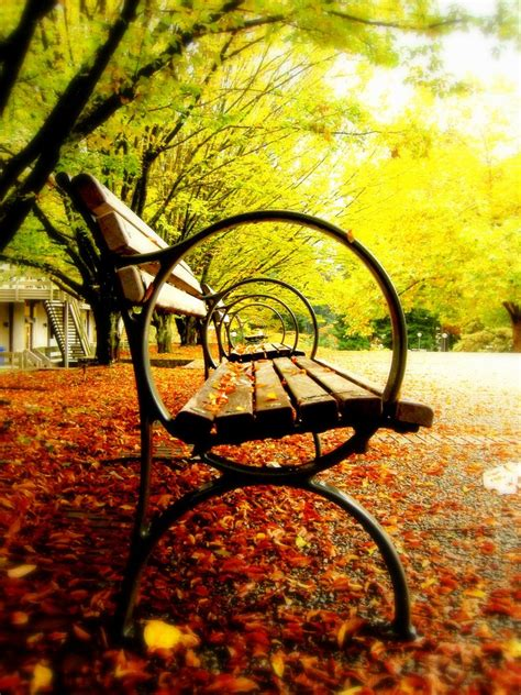 fall brilliant around colors exquisite places year