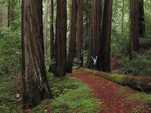 Big Basin Redwoods State Park Hiking
